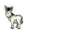 miniature donkey productions